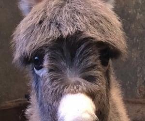 animal, cutie, and donkey image