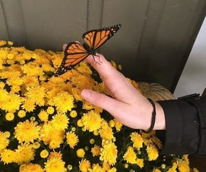 aesthetic, butterfly, and flowers image