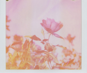flower and polaroid image