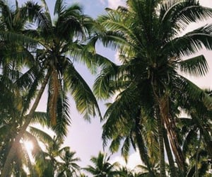 summer, nature, and palms image