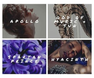 apollo, flower, and real love image