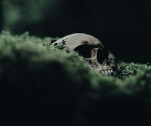 aesthetic, skull, and green image