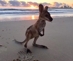 animals, baby, and beach image