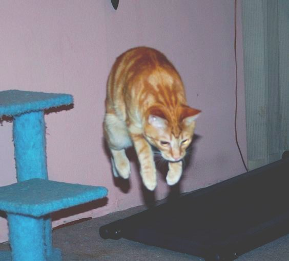 cats, unusual, and aesthetic image