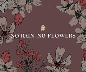 flowers, rain, and owl image
