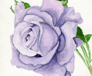 lavender, pink, and purple image