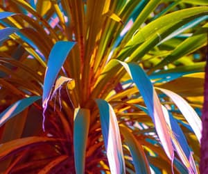 colors, nature, and plant image