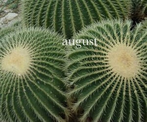 August, cactus, and nature image