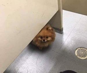 dog, bathroom, and hello image