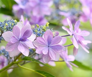 flora, flowers, and lilac image