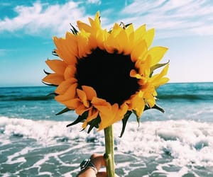 sunflower, flowers, and beach image