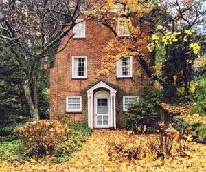 aesthetics, autumn, and beauty image