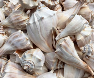 shell, ocean, and love image