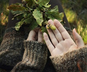 nature, autumn, and hands image