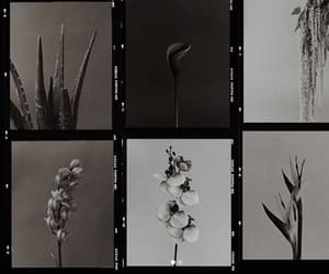 flowers, b&w, and photography image