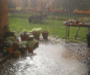 rain and nature image