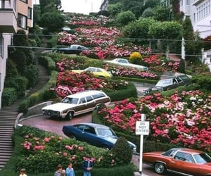 cars, city, and flowers image