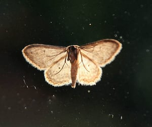 moth and black and white image