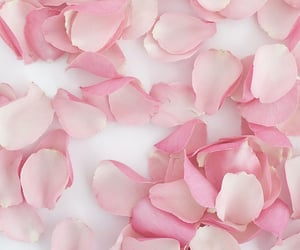 rose, petals, and pink image