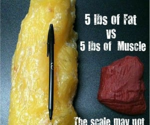 fat, fitness, and health image