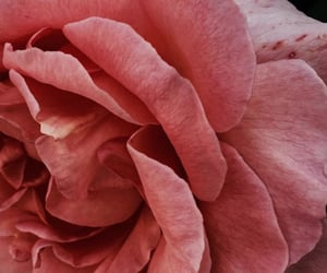 aesthetic, flower, and close up image