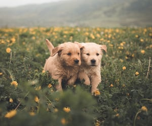 dog, dogs, and flowers image