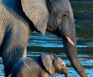 elephant and animals image