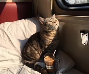 cat and train image