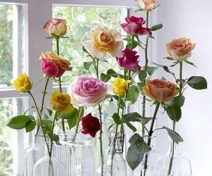 beautiful, rose, and centerpiece image