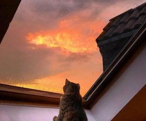 cat, sunset, and animal image