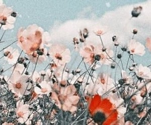 flowers, nature, and twitter banner image