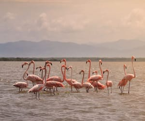 colombia, flamingos, and sanctuary image