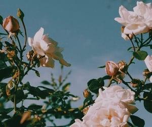 Image by amani 🌹