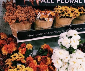 autumn, fall, and flowers image