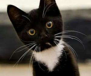 animals, pet, and cat image