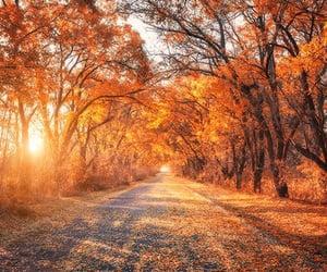nature, autumn, and orange image