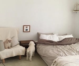 interior, dog, and room image