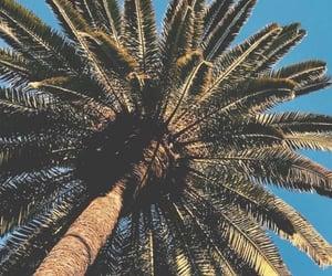 beautiful, california, and Dubai image