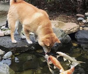 aesthetic, dog, and animals image