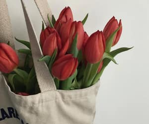 beauty, flowers, and red tulips image