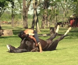 horse and gif image