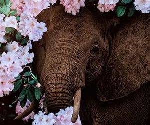 animal, elephant, and flowers image