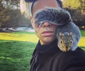 gif and squirrel image