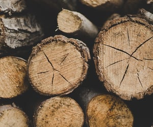 autumn, brown, and firewood image