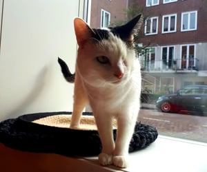 amsterdam, animals, and cats image