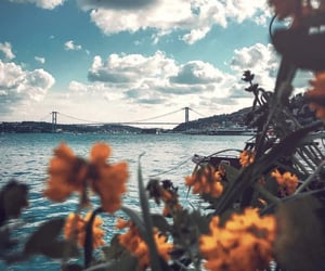 flowers, istanbul, and nature image