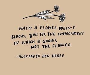 bloom, poem, and flowers image
