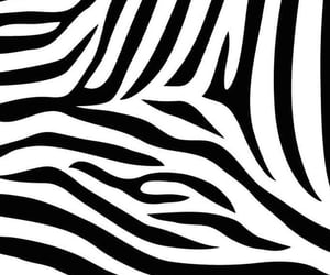 zebra, wallpaper, and background image