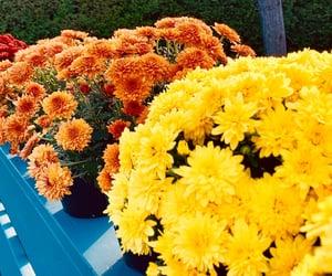 autumn, beautiful, and colourfull image