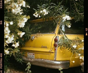 car, film, and flowers image